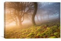Winter Woodland sunrise , Canvas Print
