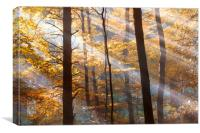 Autumn Beamage , Canvas Print