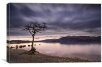 Loch Lomond, Milarrochy Bay tree, Scottish Highlan, Canvas Print