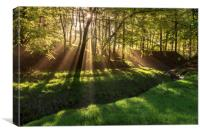 Spring morning sunrays in Hooleyhey woods, Canvas Print