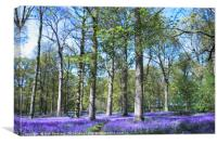 Bluebells Woods, Blickling Estate, Canvas Print