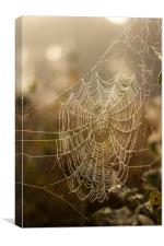 Spiders web in the mist, Canvas Print