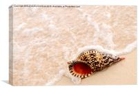 Seashell and ocean wave, Canvas Print