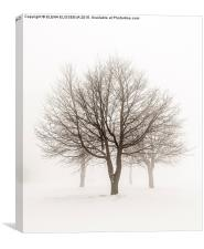 Winter trees in fog, Canvas Print
