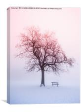Winter tree in fog at sunrise, Canvas Print