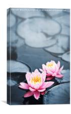 Lotus blossoms, Canvas Print