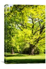Park in spring time, Canvas Print