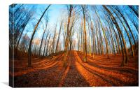 Beech forest, Canvas Print