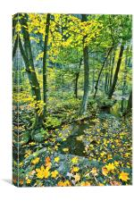 Creek in fall time, Canvas Print