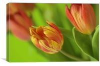 Fiery Tulips, Canvas Print