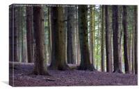 A Still Forest, Canvas Print
