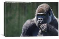 Portrait of a thoughtful gorilla, Canvas Print