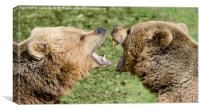 Closeup of two European bears playing together., Canvas Print