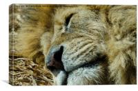 Let sleping cats lie, Canvas Print