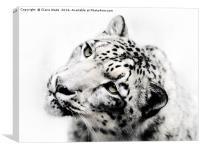 Snow Leopard on White, Canvas Print