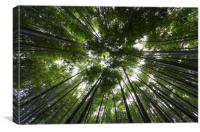 Bamboo Forest Canopy on a sunny day in Japan, Canvas Print