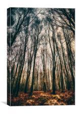 A Woodland Dawn, Canvas Print