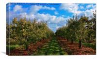 November orchard, Canvas Print