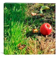 November orchard II, Canvas Print