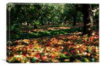 November orchard III, Canvas Print