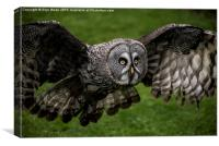 Owl in Flight, Canvas Print