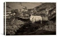 Sheep on the Rocks, Canvas Print