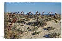 Anchor cemetery in Praia do Barril , Canvas Print