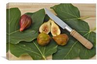 Fresh Figs, Canvas Print