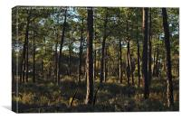 Forest Pine Trees , Canvas Print