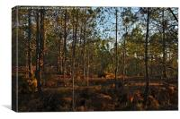 Forest During Sunset , Canvas Print