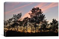 Twilight Tree Silhouettes, Canvas Print