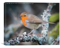 Red breast, Canvas Print