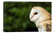 Owl , Canvas Print