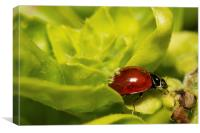 Ladybug as Host, Canvas Print