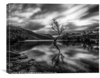 Lonely tree in Mono , Canvas Print