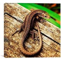 Common lizard , Canvas Print