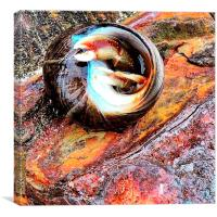 Hermit crab, Canvas Print