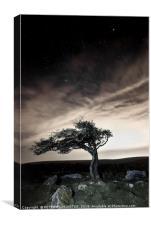 Lonesome Tree, Canvas Print