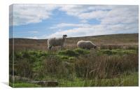 Sheep at Haworth, Canvas Print