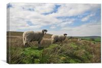 Sheep on a hillside , Canvas Print