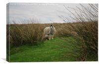 Sheep on a hillside hiding, Canvas Print