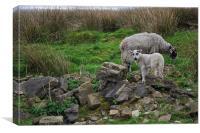 Sheep Among Ruins, Canvas Print