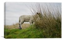 Little Lamb Hiding on the Hillside, Canvas Print