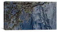 Dying Tree at Smith Rock, Canvas Print