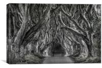 The dark hedges in black and white, Canvas Print