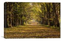 Autumn Causeway, Canvas Print