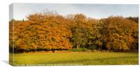Gateway To Autumn , Canvas Print