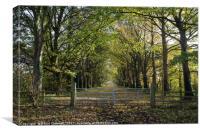 Gateway To Autumn, Canvas Print