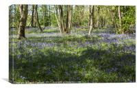 Burton Mere Bluebell Wood , Canvas Print