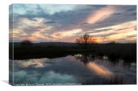 Natterjack Pond Reflection , Canvas Print